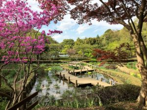 薬師池公園の花しょうぶエリア
