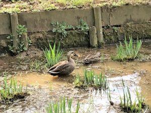 薬師池の鳥