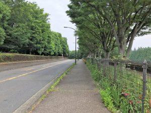 公園沿の道