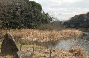 引地川・しからしの池
