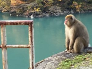 宇奈月湖とおサルさん
