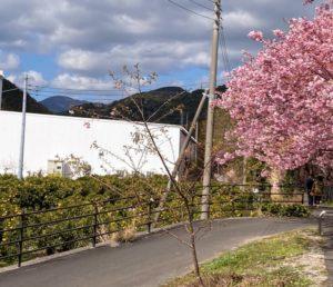 河津桜とニューサマーオレンジ