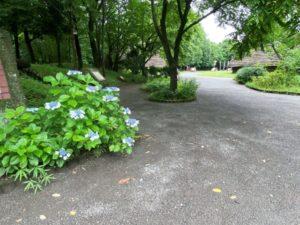 根古谷台遺跡 散策路