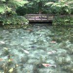 名もなき池 モネの池