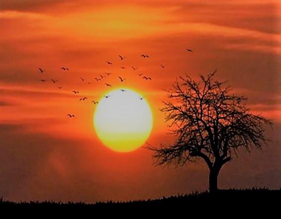 「この世界の片隅に第7回は昭和20年8月がやってきます。第6回は散り行く日々と命。晴美ちゃん!」のアイキャッチ画像