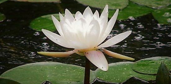 高嶺の花10