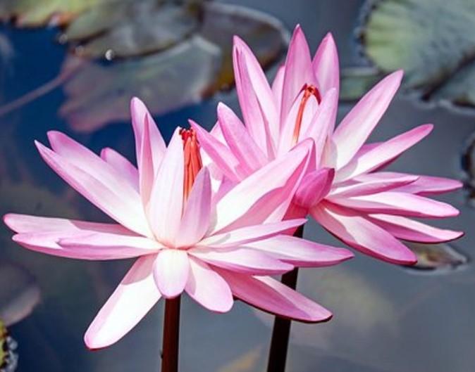 「高嶺の花第5回は「高嶺の花」に相応しい条件とは?第4回はやっぱり本当の父は高井さん、でした。」のアイキャッチ画像