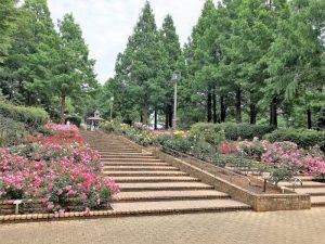 バラの階段