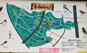 泉の森地図
