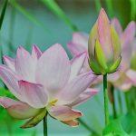 高嶺の花7