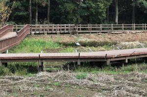 引地川の湿地と鷺