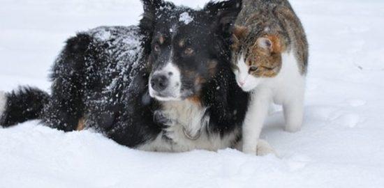猫と犬 冬