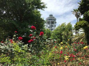 江ノ島塔と薔薇