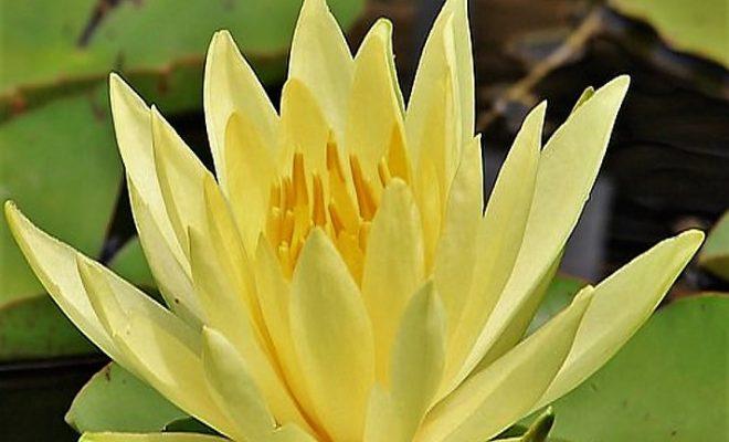 高嶺の花8
